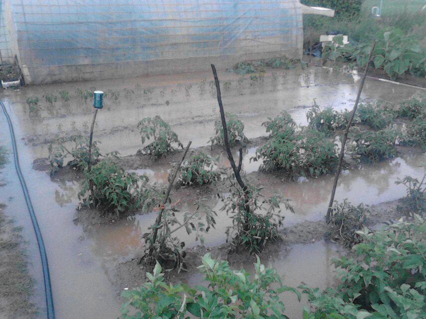 Mecerreyes, huertas 2013 inundaciones (1)