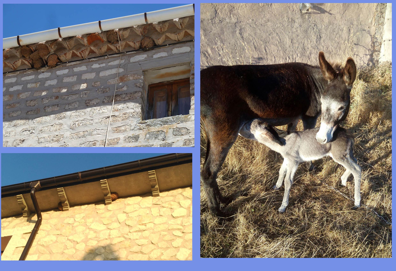 Julio 2016, Mecerreyes, nidos golondrinas y nacimiento burrito