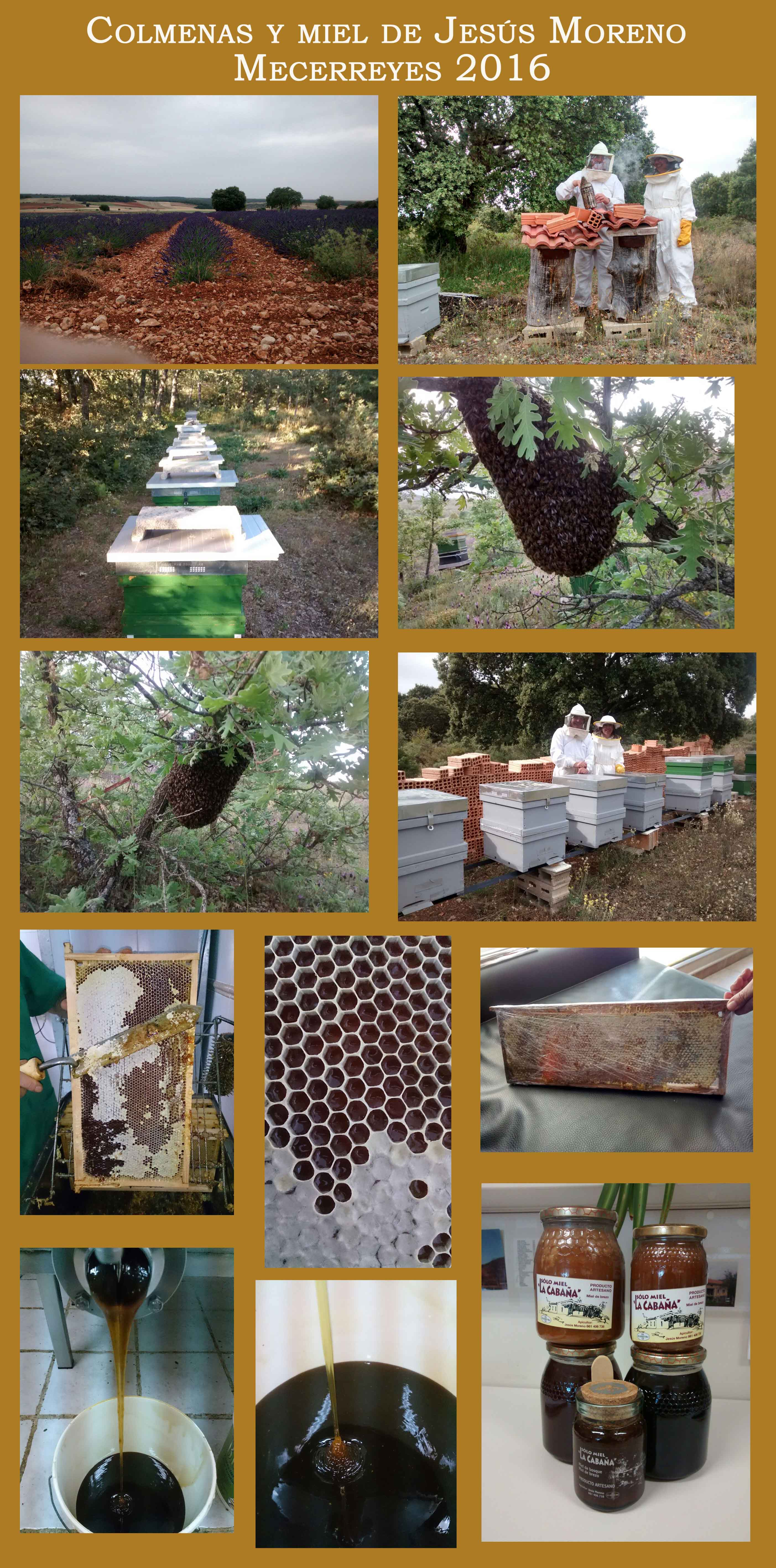 Mecerreyes, colmenas y miel de Jesús Moreno, octubre 2016