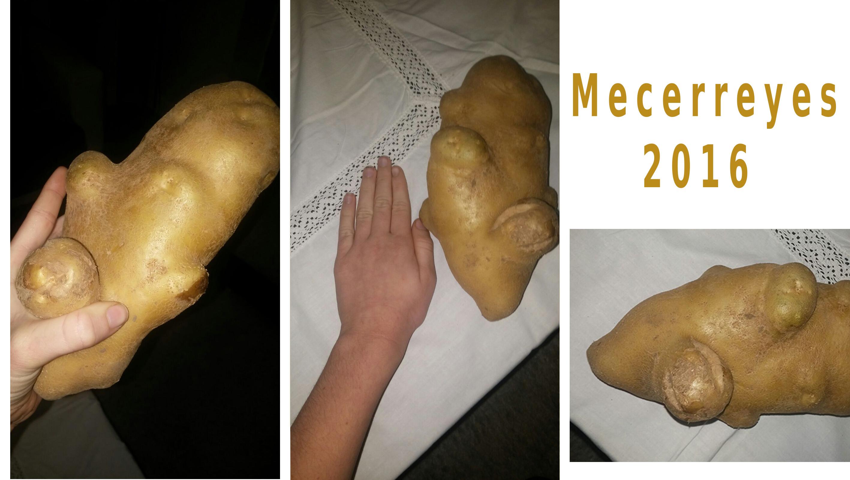 Patata cosecha de Mecerreyes, 2016